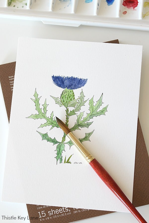 Simple Botanical Watercolor - Thistle
