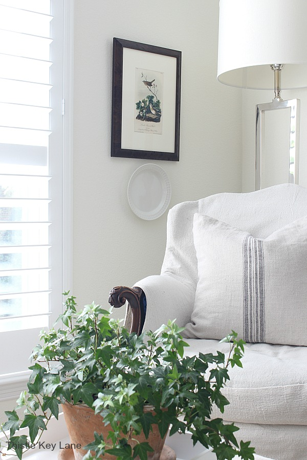Ivy plant with white chair in background - How To Create A Cozy Reading Corner.