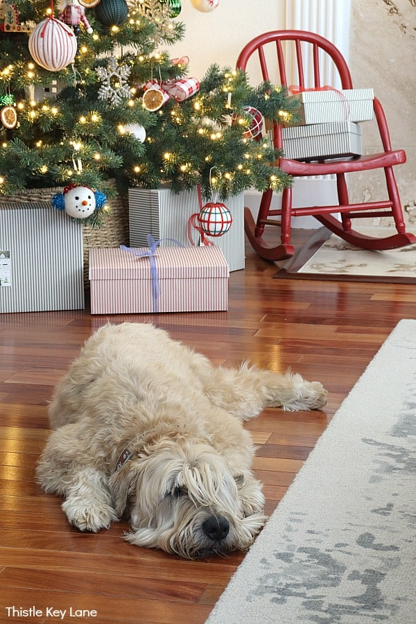 Wheaten terrier sleeping in front of the Christmas tree. Christmas In The Kitchen And Family Room.