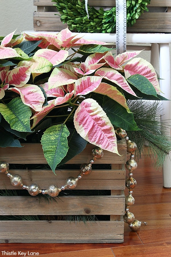 Pink Poinsettias In A Crate With Silver Bead Garland. How To Decorate With Poinsettias In Crates.