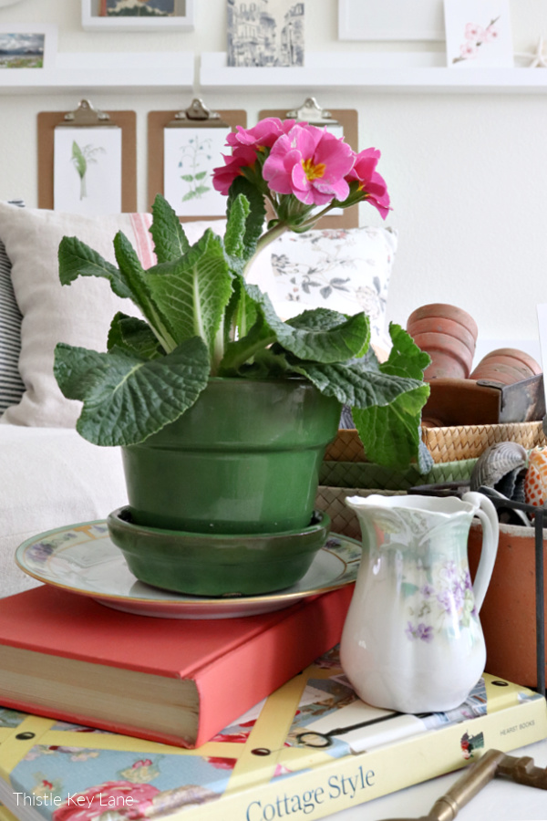 Winter Botanical Inspired Vignette with a potted pink primrose.