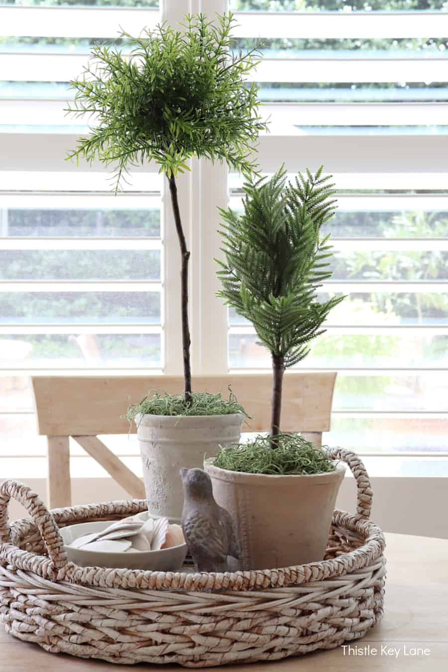 Rosemary and cedar topiaries in a basket tray. How To Create A Faux Topiary