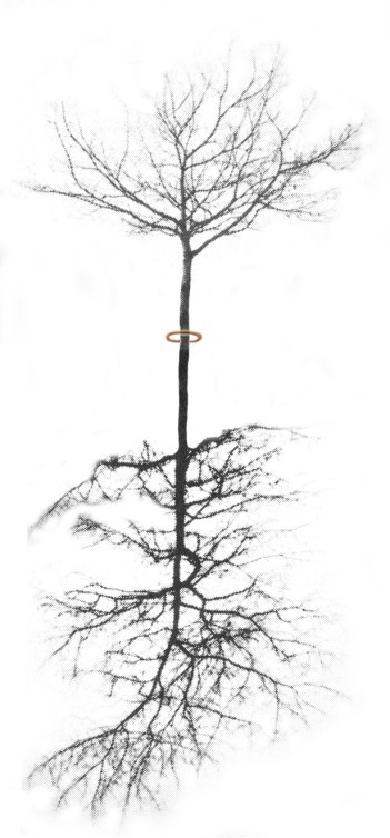 hanging sculpture, never made