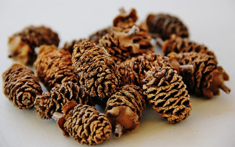 Assemble your pine cones for the twig wreath.