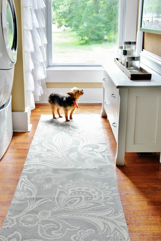 laundry room and Yorkie