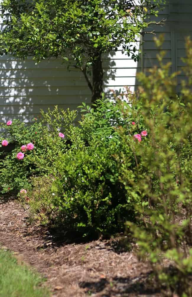 Location matters a lot when planting hydrangeas.