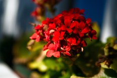 doug_kaye_flowers
