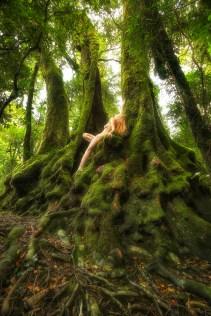 antarctic-beech-exhaltation-treegirl-tkaweb