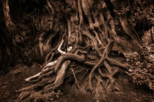 becoming-redcedar-lily-treegirl-11-30-16-tkaweb-12by8in