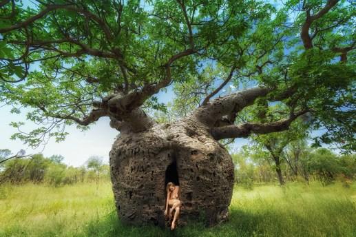 boab-prison-tree-respite-treegirl-tkaweb