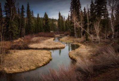 ©Andrea (AKA - Ande S) - Utah road trip - Dixie National Forest