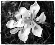 Flowers02wm