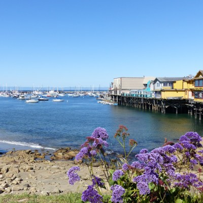 Seafood and sea life in Monterey