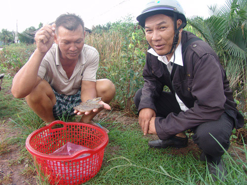 Lao-theo-gia-nha-nong-danh-cuoc-vu-tom-tet-1-1545885222-521-width500height375