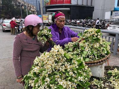 hoa buoi 2