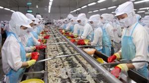 Xuat-khau-tom-sang-thi-truong-EU-nam-2020-du-bao-dat-toi-800-trieu-USD