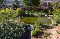 Jardin permaculture Sidi Moumen