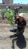 Semaine de l'arbre Skoura Ouarzazate
