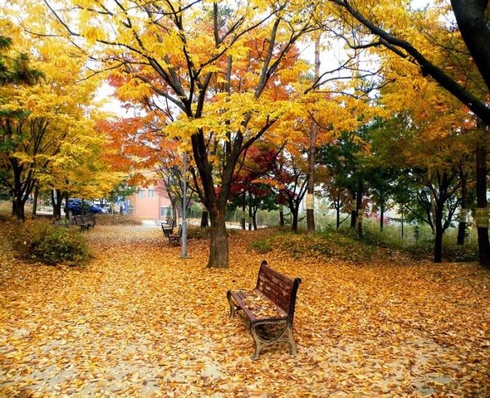 Mùa thu lá bay - Chiêm ngưỡng vẻ đẹp mùa thu Hàn Quốc