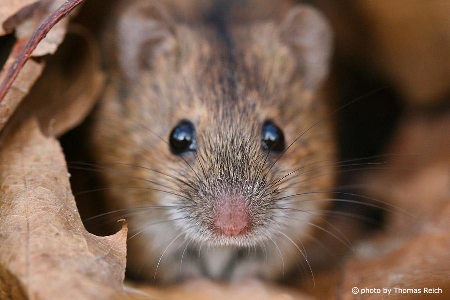 Chuyện con chuột