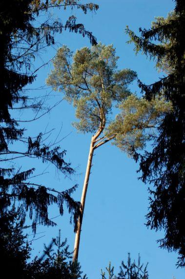 Eiswoog Pfälzerwald - 06