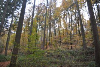 Eiswoog Pfälzerwald - 12