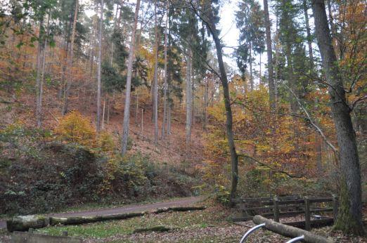 Eiswoog Pfälzerwald - 14