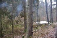 Eiswoog Pfälzerwald - 32