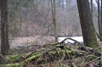 Eiswoog Pfälzerwald