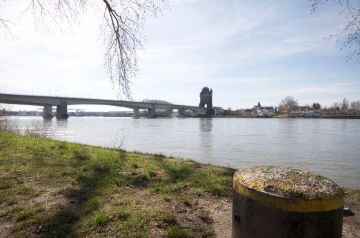 Maulbeeraue Rhein - 1