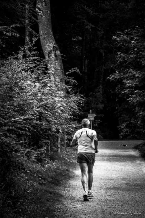 Pris sur le vif lors d'une promenade en forêt de Kéroual à Brest (Finistère).