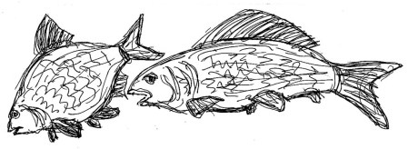 Fische Blei-Aesche