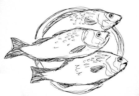 Fische Flussbarsche3