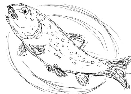 Fische Forelle