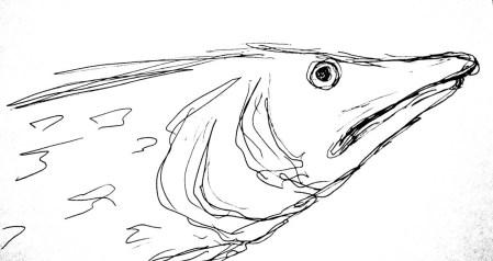 Fische Hecht3