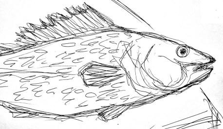 Fische Zander3