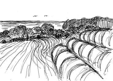 Jasmund26-Felder bei Ranzow