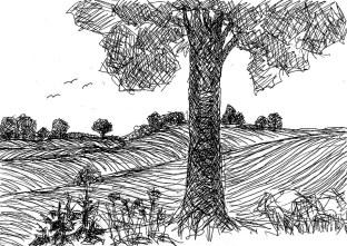 UckerSk13 Landschaft bei Angermuende 3