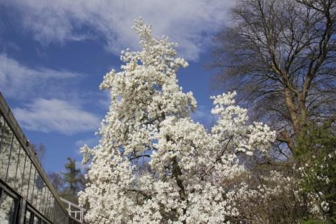 img 0516 Spring into April