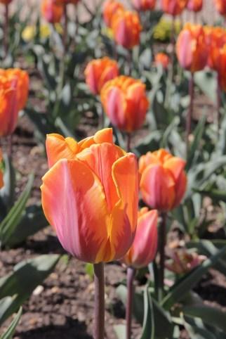 img 0851 Cliveden, a garden visit, part 1