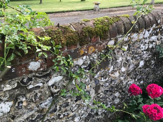 img 0190 Pruning once flowering rambling roses