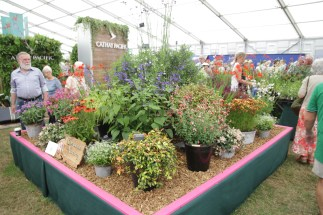img 1553 Hampton Court Flower Show a world of flowers