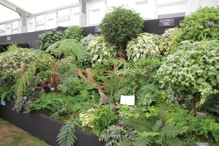 img 15561 15ish eye catching plants at Hampton Court