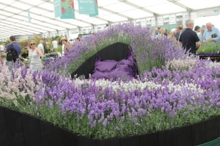 img 1626 Hampton Court Flower Show a world of flowers
