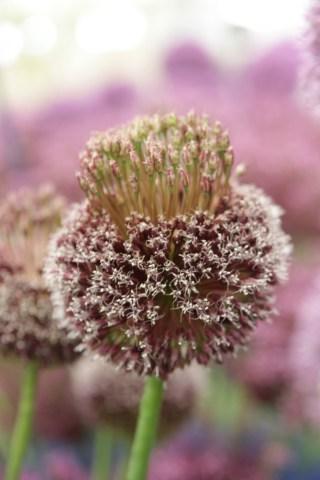 img 1660 1 15ish eye catching plants at Hampton Court