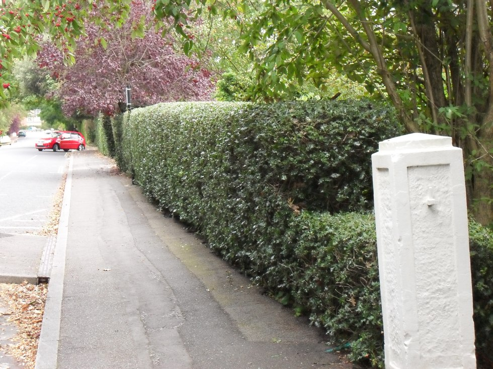 sdc10017 Hedge trimming tips