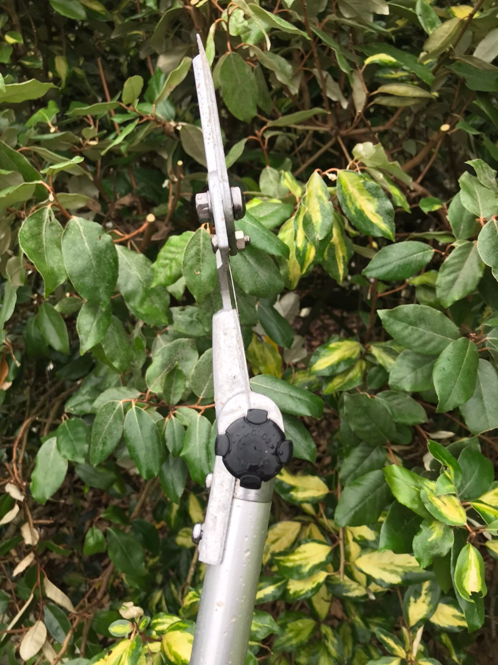 img 1185 Tool review ARS telescopic long reach pruner 180ZR 3.0 5