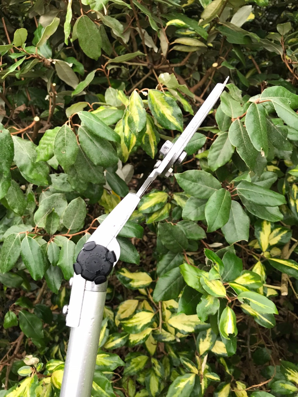img 1186 Tool review ARS telescopic long reach pruner 180ZR 3.0 5
