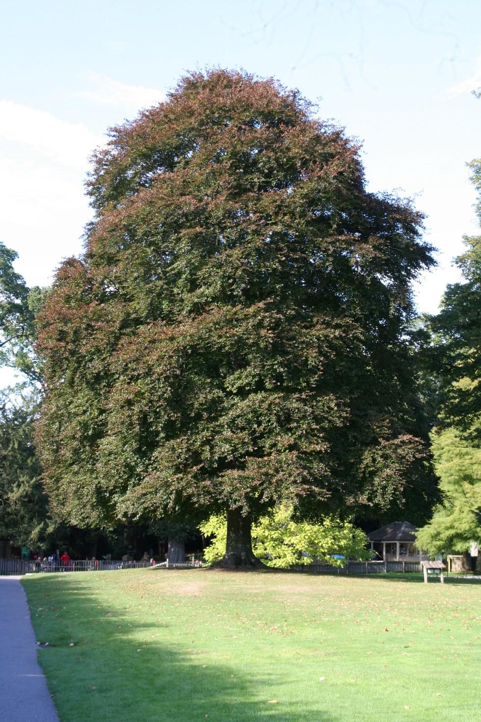 img 2219 National tree week celebrating trees