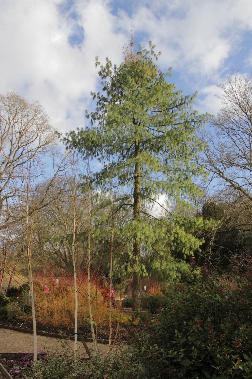 img 3259 National tree week celebrating trees